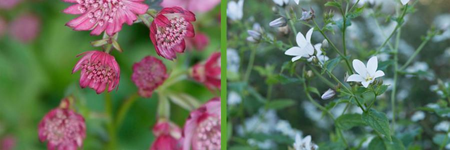 Elk seizoen kleur met bloeiende vaste planten