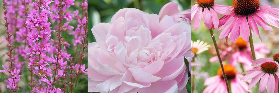Top 10 plukbloemen
