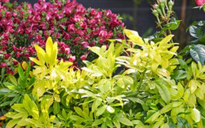 Geurende Blikvangers: tuinplanten van de maand mei